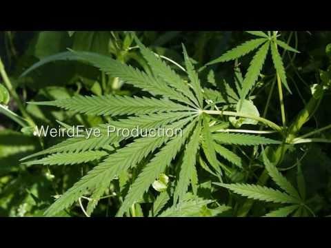 Video Health Benefits of Marijuana