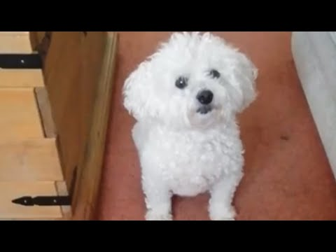Dog embarrassed by owner's humiliating revelations