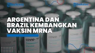 Brazil dan Argentina Melakukan Kerja Sama dalam Kembangkan Vaksin mRNA Covid-19 di Amerika Latin