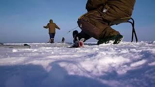 Рыбалка в тольятти тлт фишинг