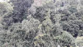 preview picture of video 'Tarzan swing dante pine Enrekang'