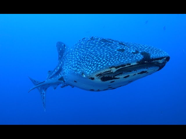 Best of diving Philippines - Tubbataha reef (HD)