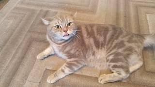 Кот говорит отстань от кота