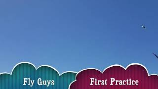 Fly Guys - Revolution Practice