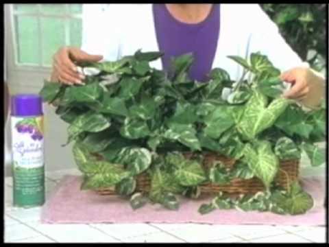 Ang pinakamahusay na produkto para sa dry buhok pag-aalaga