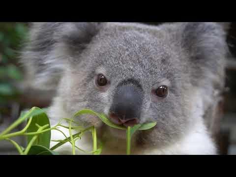 【東山動植物園公式】インディコとちょっとだけココ