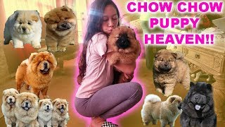 WE GOT A PUPPY!!! | CHOW CHOW RESCUE HOME