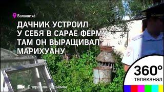 Ферму по выращиванию марихуаны прикрыли балашихинские полицейски