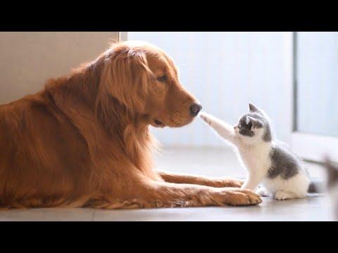 כלבים גדולים פוגשים חתלתולים קטנים