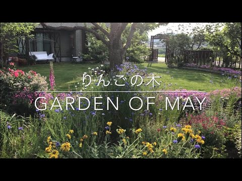 , title : 'りんごの木・Garden  of May