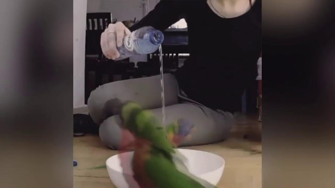 Веселые попугайчики
