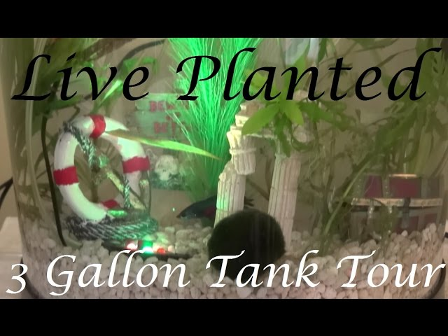 Campbell's Live Planted Tank Tour | First Aquascape!