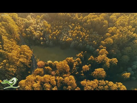 "Beautiful Relaxing Music: ""Early in the Morning"" by Peder B. Helland (Official Video)"