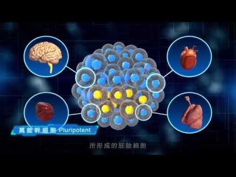 無限可能的起點 細胞治療(幹細胞)
