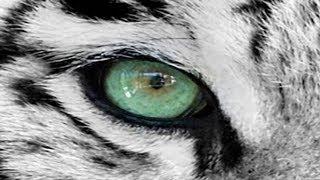 Как поменять цвет глаза в Photoshop  за 1 минуту