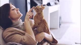 ЧТО НУЖНО ДЛЯ КОШАЧЬЕГО СЧАСТЬЯ  WHAT YOU NEED FOR THE CAT'S HAPPINESS