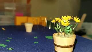 Dollhouse Black-eyed Susan Flower/Plant