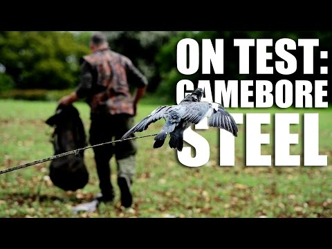 Shooting pigeons with steel