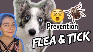 Flea & Tick Prevention Chemical Free