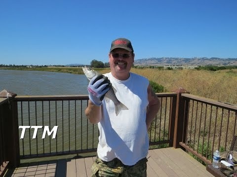 How to Use Frozen Anchovies for Bait Fishing and Catching Striped Bass