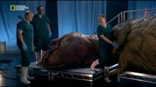 Проект Динозавр!!!! ОЧЕНЬ ИНТЕРЕСНО!!!