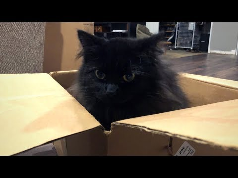 Moving with a Cat