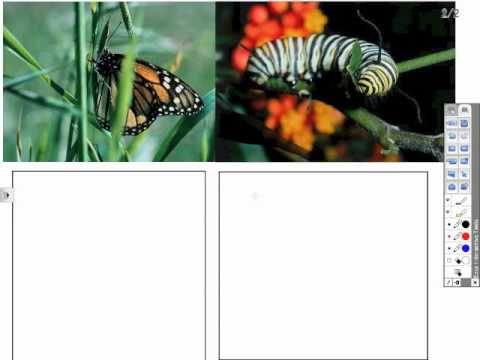How To: Use Image Files for Creating Lessons in Elementary Grades