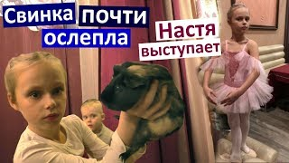 Vlog Попали с Настей на ужасный спектакль. Заболел морской свин. Как занимается Настя?
