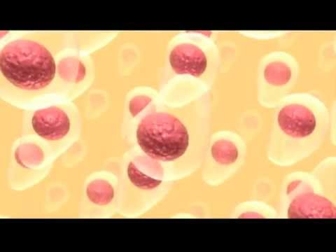 Osteoporosi e menopausa nelle donne video