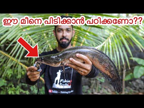 നാടൻ ചേറുമീൻ പിടിച്ചു വറുത്താലോ? | kerala snakehead fishing and cooking | Toman fishing