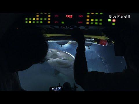 O momento em que tubarões gigantes atacam tripulação de submarino
