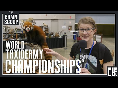 I waited 4+ years for this: the World Taxidermy Championships!