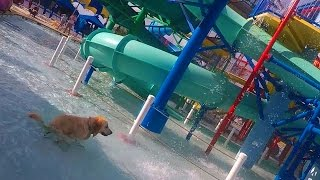 Download Youtube: Dog Poops in a Water Park (Super Pooper Sunday #37)