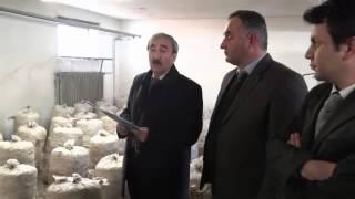 preview picture of video 'bilecik istiridye mantarı hasadı'