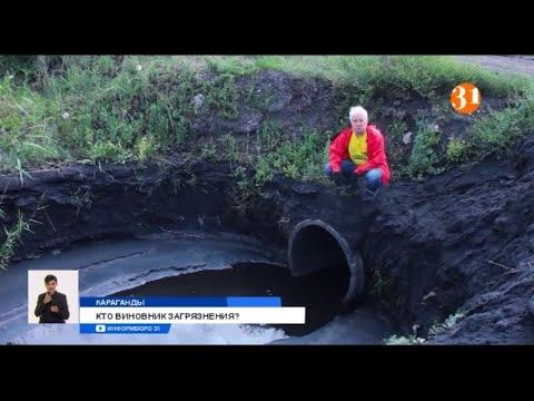 Пастбища и река в Караганды оказались отравлены токсичными стоками