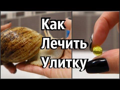 Корень алтея против паразитов