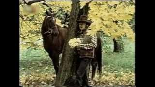 Greenhorns - Žlutá kytka a další hity
