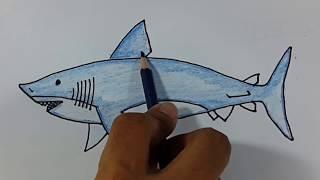 Descargar Mp3 De Gambar Ikan Gratis Buentema Org