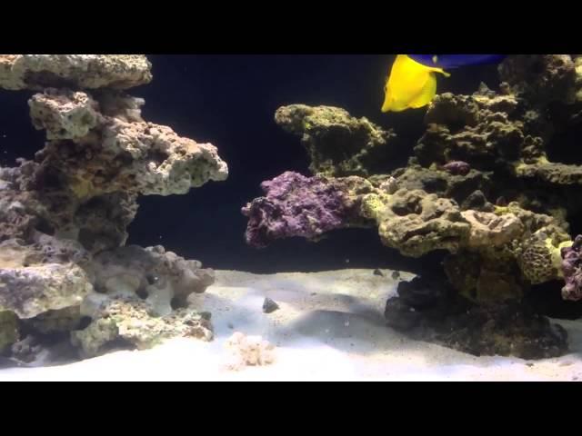 200g Reef Tank - Episode 29 - New Islands Aquascaped ( part 2 )