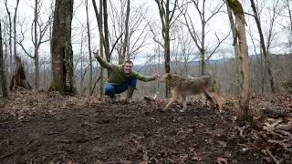 I CAUGHT A COYOTE! #shorts