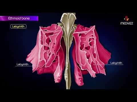 Boli ale articulațiilor genunchiului la adolescenți