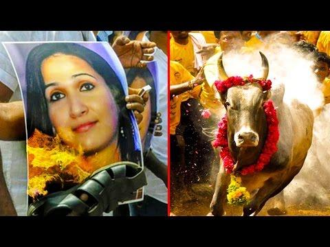 Soundarya-Rajinikanth-clarifies-her-role-with-AWBI-and-Jallikattu-Issue-Hot-Tamil-Cinema-News