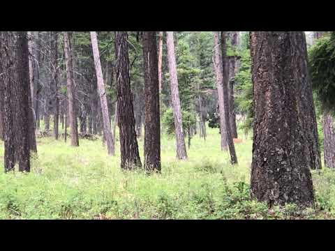 Deer in camp