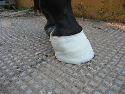 El hongo sobre las uñas de los pies de que