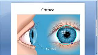 Ophthalmology 104 a Cornea Structure Histology Layers Function Anatomy Eye Nutrition Nerve Dua New