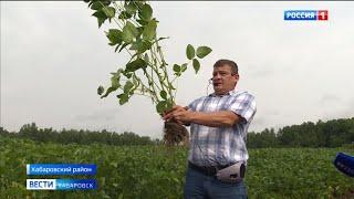 День поля отметили представители сельхозотрасли Хабаровского края