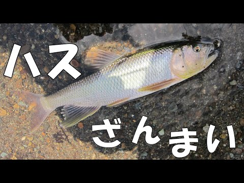 """[HD]Fly fishing of Three-lips in Japan. """"Flyfisher's eyes. No.39"""""""