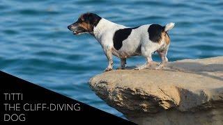 Titti: Malta's Cliff-Diving Dog