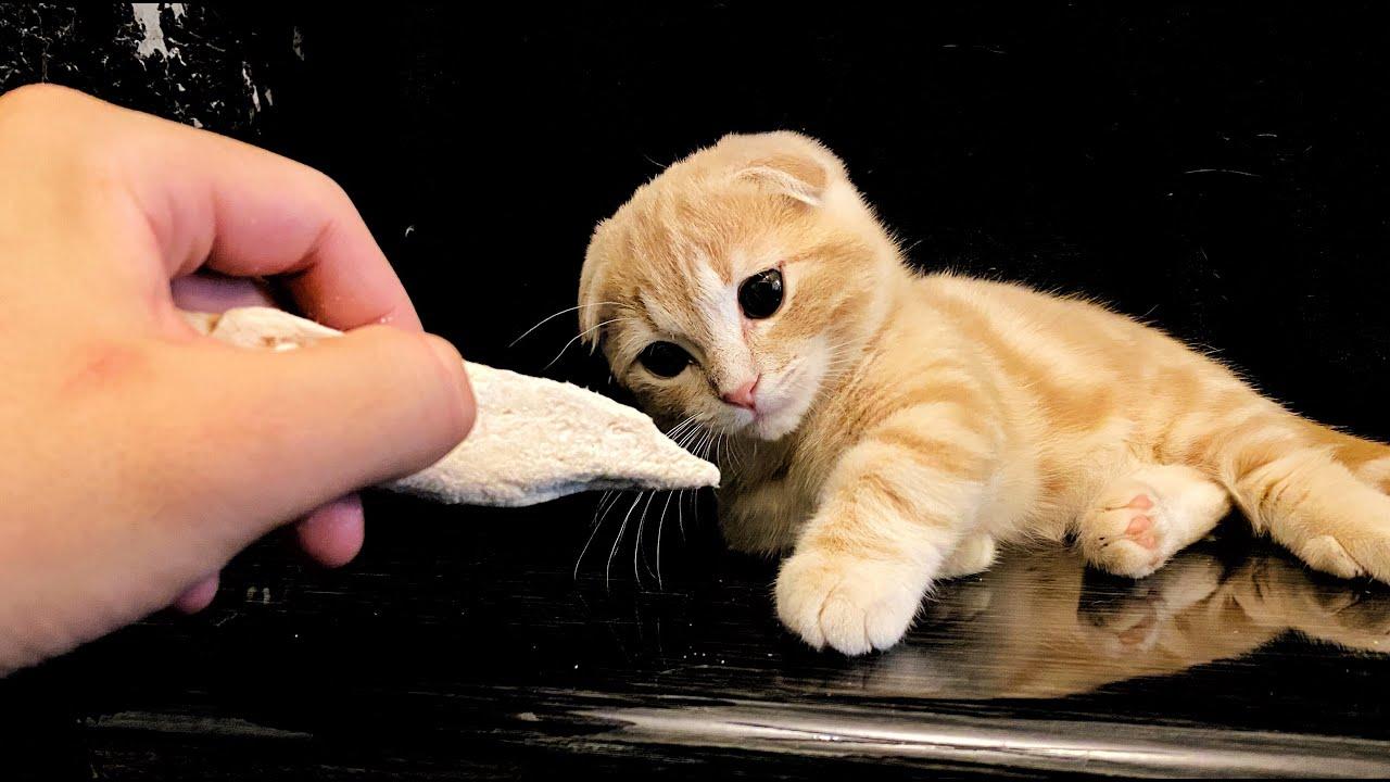 ささみを初めてを食べる子猫の反応が可愛すぎた...