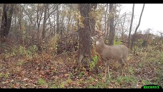 Proven Hunting Tips for Using Deer Scents